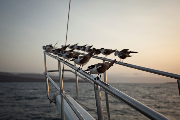 Birds on bow, Bay de Ghoubett (3), Mark Priest