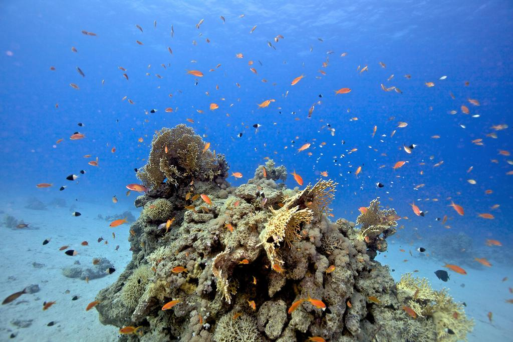 Coral Reefs (02)